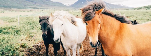 Equine Therapy and Addiction Treatment