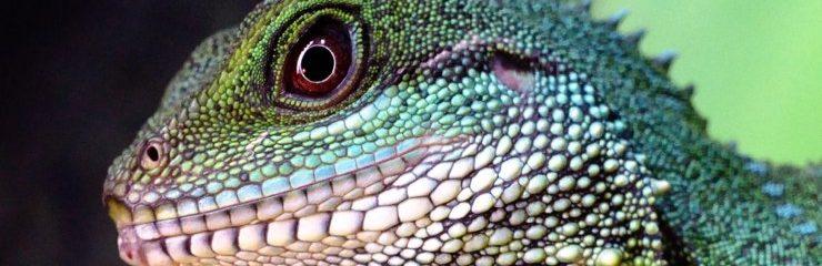 The Lizard Brain and Addiction